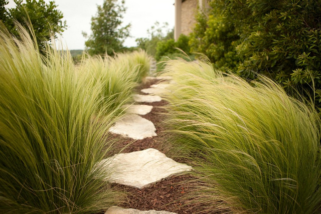 Incorporating ornamental grasses into your landscape zen for Ornamental feather grass