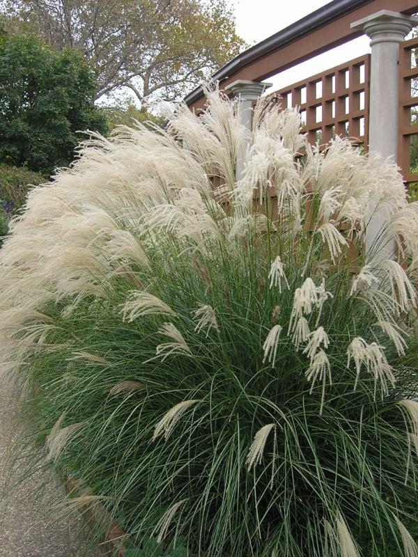 Incorporating Ornamental Grasses Into Your Landscape Zen