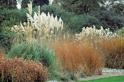 Incorporating Ornamental Grasses Into Your Landscape Zen