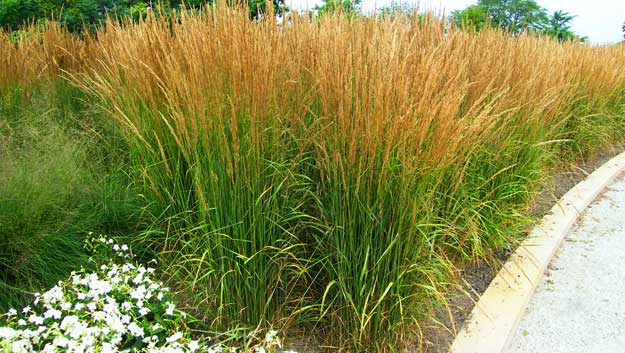 Incorporating ornamental grasses into your landscape zen for Tall grass garden