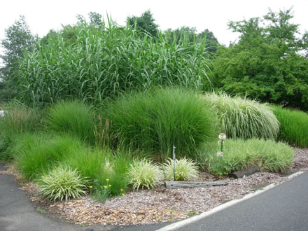 Incorporating ornamental grasses into your landscape zen for Tall outdoor grasses