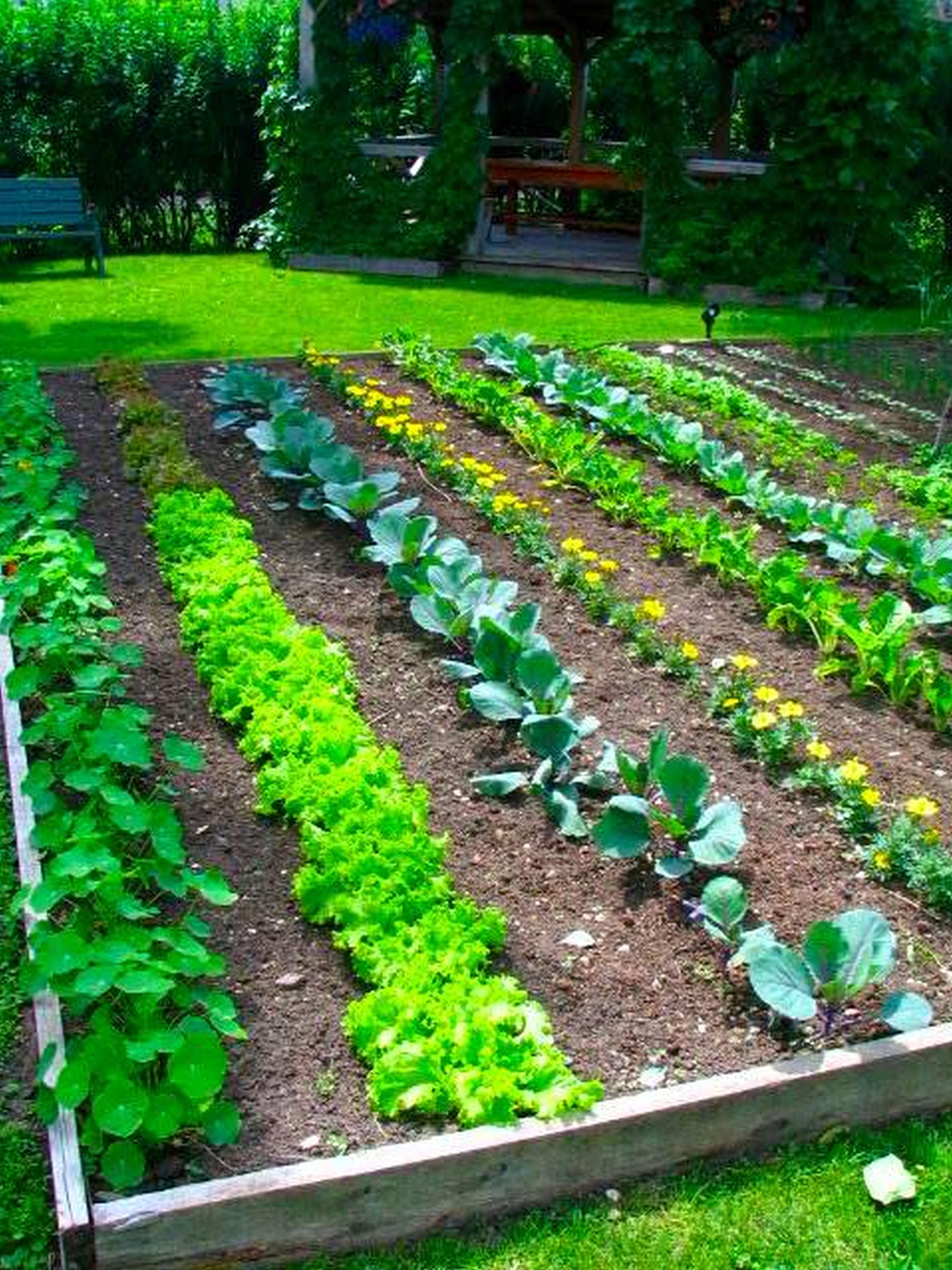 vegetable gardening ideas small vegetable garden ideas home garden learn the value of growing a home