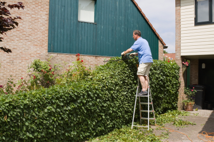 HomeZada Home Maintenance Tip trim shrubs away from siding