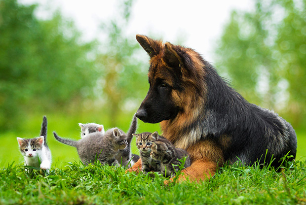 cats_dogs_2