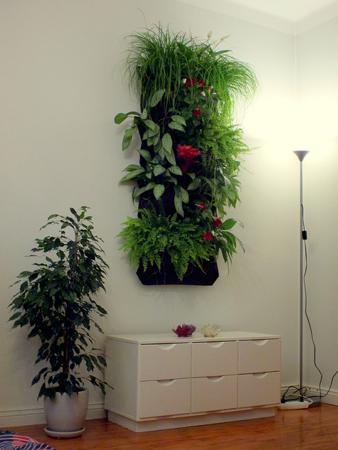 How to Make an Indoor Green Living Wall