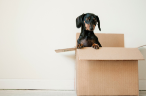 How to do a home inventory when moving