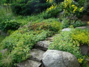 Quick Guide to Creating Your Own Rock Garden