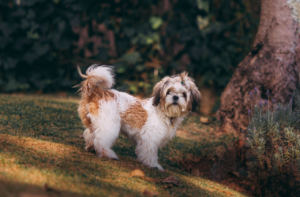 Moving House with Your Pet (The Don'ts!)