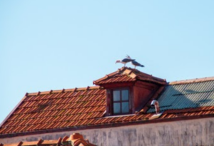Bird Control: How To Keep Animals Out Of Your Attic And Chimney