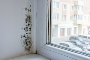Consequences of Too Much Humidity in the Home